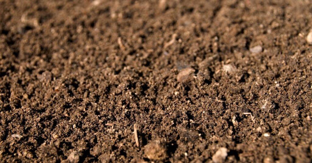 brown loamy dirt