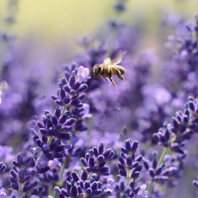 5 Simple Ways to Attract Pollinators to Your Garden